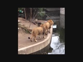 Подборка неуклюжих животных gjl,jhrf yterk.b bdjnys