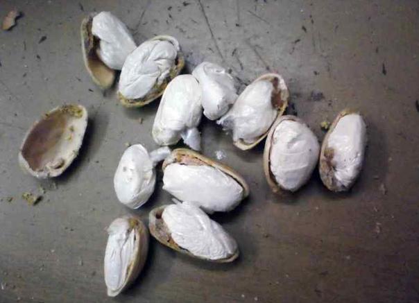 Маньяки и орешки В единственной новосибирской колонии особого режима, в которой отбывают наказание серийные убийцы, маньяки и террористы, нашли необычные орехи.«В исправительной колонии 13
