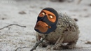 A Very Angry Spy