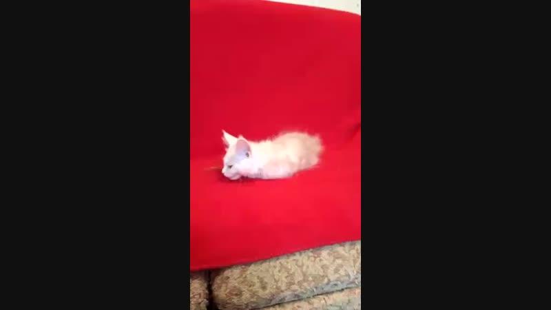 Uldis Улдис кот красный дым д р 25 11 18г