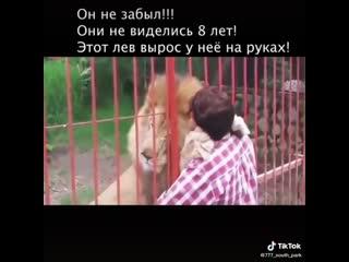 Этот лев вырос у неё на руках, он её не забыл..они не виделись 8 лет...