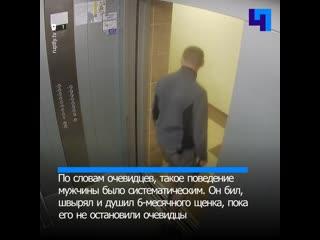Активисты Краснодара требуют наказать живодера, который регулярно избивал своего щенка
