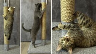 Как сделать когтеточку своими руками. Мои коты в восторге!