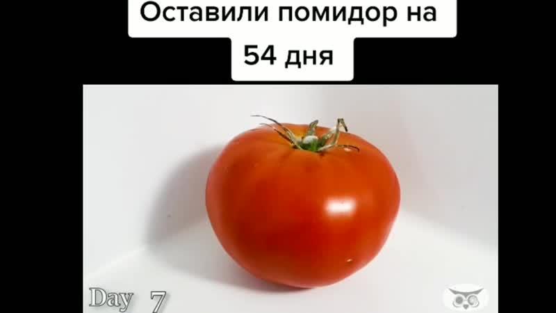 Оставить помидор на 54 дня