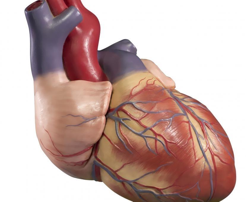 Кардиохирурги - это медицинские работники, которые выполняют хирургические операции на сердце человека.