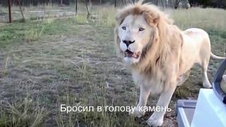 """Отзыв, Парк львов """"Тайган"""" и Ялтинский Зоопарк """"Сказка"""", конвейер смерти для диких животных. КРЫМ."""