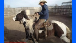 When Loving Owners Teach Horses Bad Lessons - They Call Others To Solve The Bucking Problem