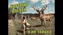 Сафари парк MORE. Путешествие в мир диких животных