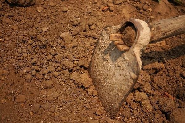 Как узнать тип почвы, и зачем это нужно.  Вопрос...