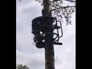 Устройство для спила веток с дерева