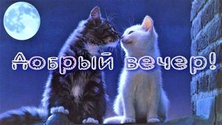 Добрый вечер! Красивое пожелание доброго вечера! Музыкальная открытка С Добрым вечером!