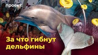 Ад для китов: за что в России гибнут морские млекопитающие