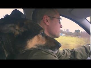 Не сажайте собаку на цепь! История моей собаки.