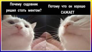 БЕЛЫЙ КОТ КАЧАЕТ ГОЛОВОЙ ПОД МУЗЫКУ / МЕМЫ