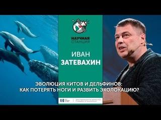 Иван Затевахин. Эволюция китов и дельфинов: Как потерять ноги и развить эхолокацию?