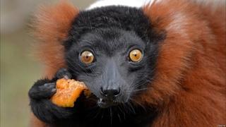 ЗООЛОГИЯ ПОЗВОНОЧНЫХ (Лекция): Разнообразие и виды млекопитающих | Интересные факты про  животных