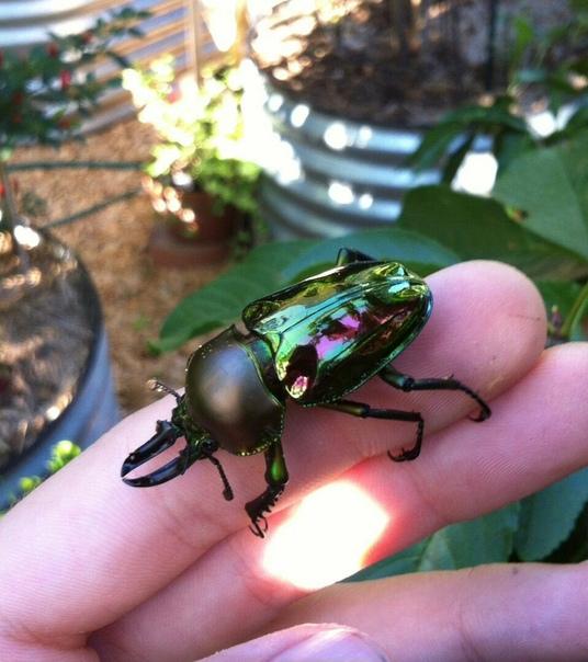 Красивый жук!