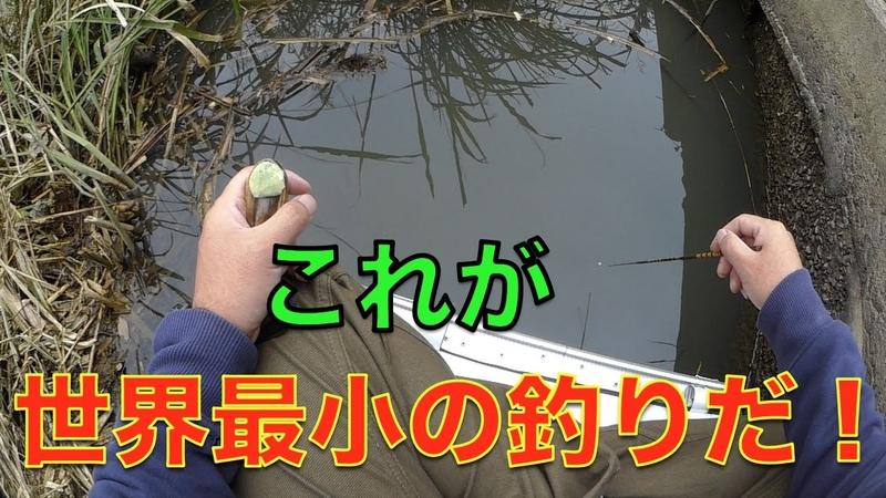タナゴ釣りが気になる方、始めたい方へ