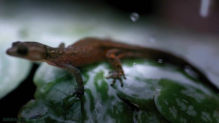BBC Круглая планета 09 Дождевые леса Познавательный природа животные пародия 2016
