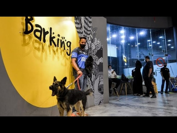 In a changing Saudi Arabia the first dog cafe delights pet lovers