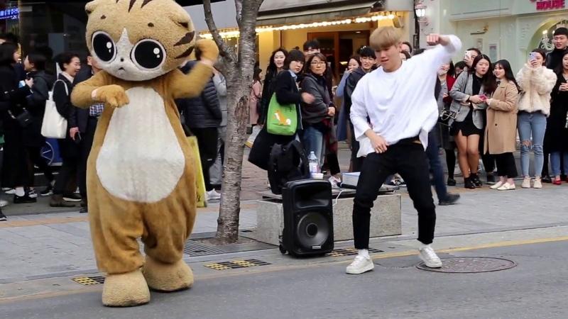 JHKTV 신촌명물고양이댄스 shin chon special cat k pop dance dancer 박준학 bang bang bang