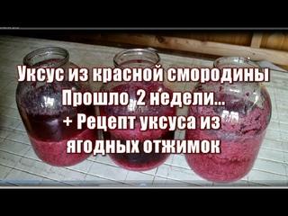 383_Уксус из красной смородины. Прошло 2 недели...Плюс рецепт уксуса из ягодных отжимок