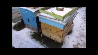 работа с пчелами в феврале - на что особо надо обратить внимание