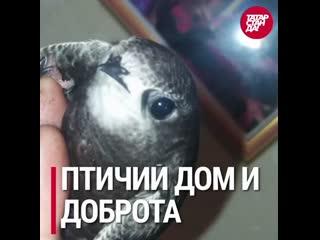 Самые обсуждаемые в соцсетях новости Татарстана от 4 августа 2020 года