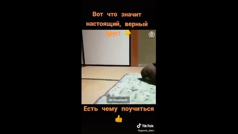 VIDEO 2020 11 15 18 09