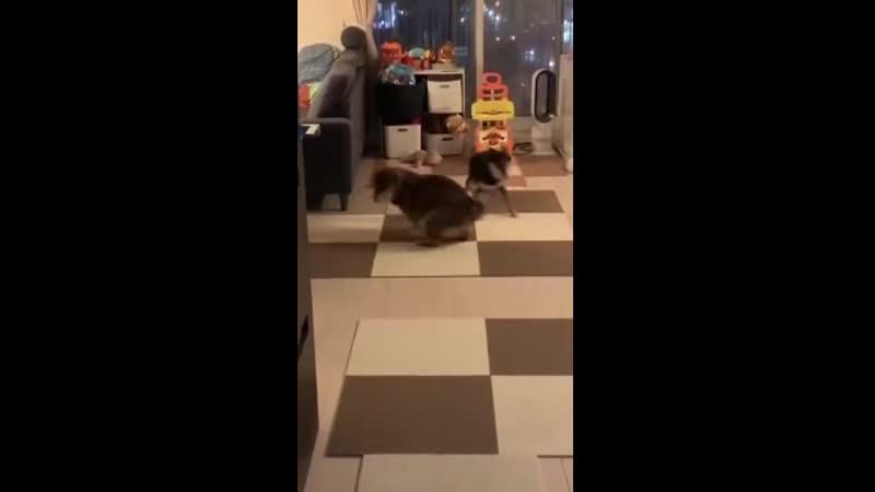 Собачьи дела