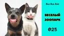 Говорящие коты. Озвучка котов. Приколы с животными / Подборка 025