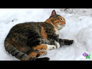 К ногам девушки упала кошка - задубевшая от мороза, вся в инее. На нее было холодно даже смотреть