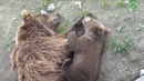 The cutest bears ever: mom with her cub