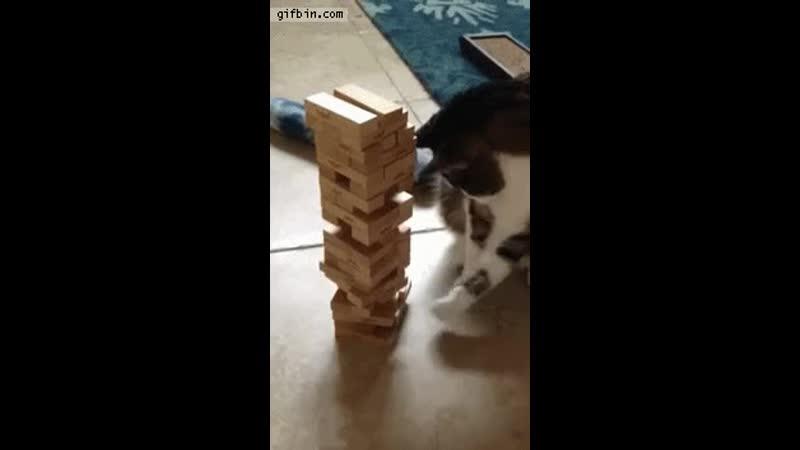 Cat playing Jenga