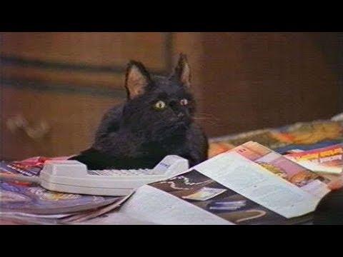 Сабрина маленькая ведьма Все моменты с котом селем