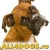 Зоомагазин All4dogs.ru: доставка корма для собак
