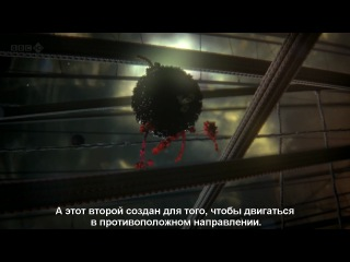 Bbc: внутренняя вселенная: тайная жизнь клетки / our secret universe: the hidden life of the cell (2012) hdtvrip