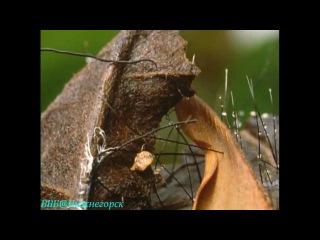 BBC Невидимая жизнь растений 4 Социальная борьба Документальный 1995