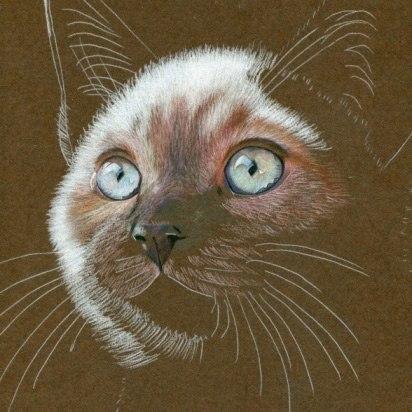 Процесс рисования кошки пастелью