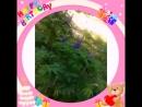 мои друзья поздравили меня с днем рождения))
