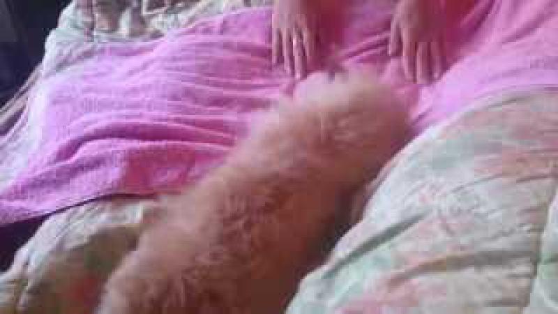 Собака с именем Пончик вышла из душа Это она ужн после вытерается Ржака