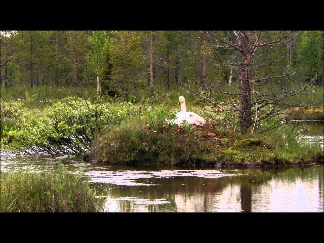 Дикая природа Скандинавии