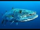 Самые опасные животные — Морские глубины Документальные фильмы Nat Geo Wild HD