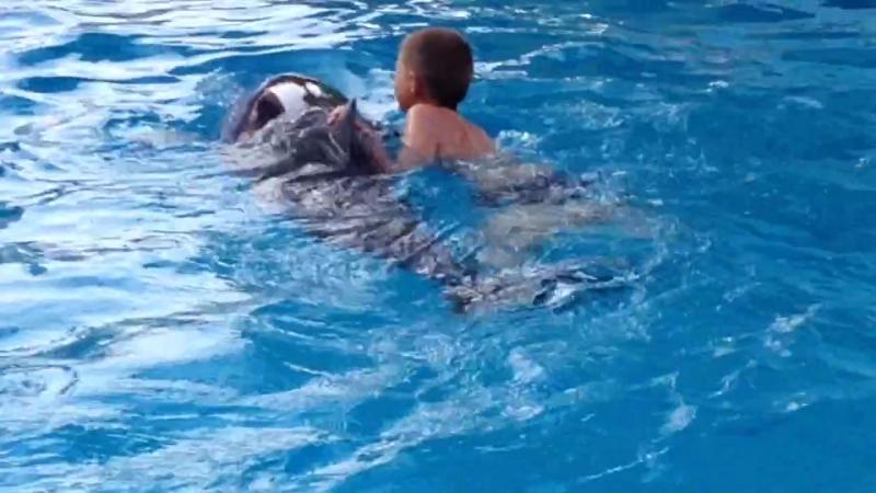 Самые искренние детские эмоции в Мире Денис плавает с дельфином