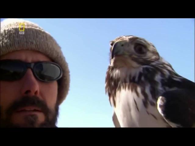 Дикая природа Сила хищных птиц Документальный фильм National Geographic