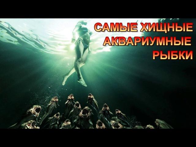 САМЫЕ ХИЩНЫЕ АКВАРИУМНЫЕ РЫБКИ THE MOST PREDATORY AQUARIUM FISH