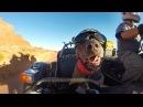 GoPro Ara and Spirit собака питбуль -коляска