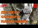 Рейтинговый Русский Боевик 2015 Дружба особого назначения 2015 Крутое кино HD Онлайн