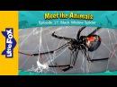Meet the Animals 17 Black Widow Spider Wild Animals Little Fox Animated Stories for Kids
