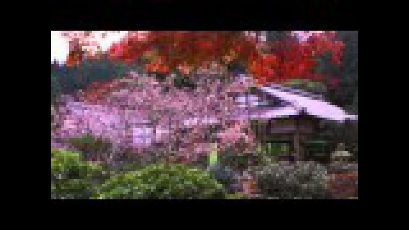 Kyoto in Japan 京都100名庭 実光院 Jikko in 100 elections of Kyoto great garden